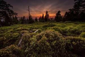 Nationalpark Schwarzwald web